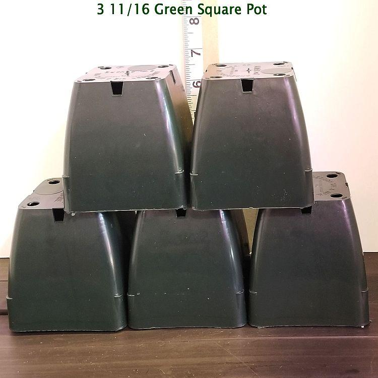 3 11/16'' Green Square Plastic Orchid Pot (15 Pack) Sophie's Orchids